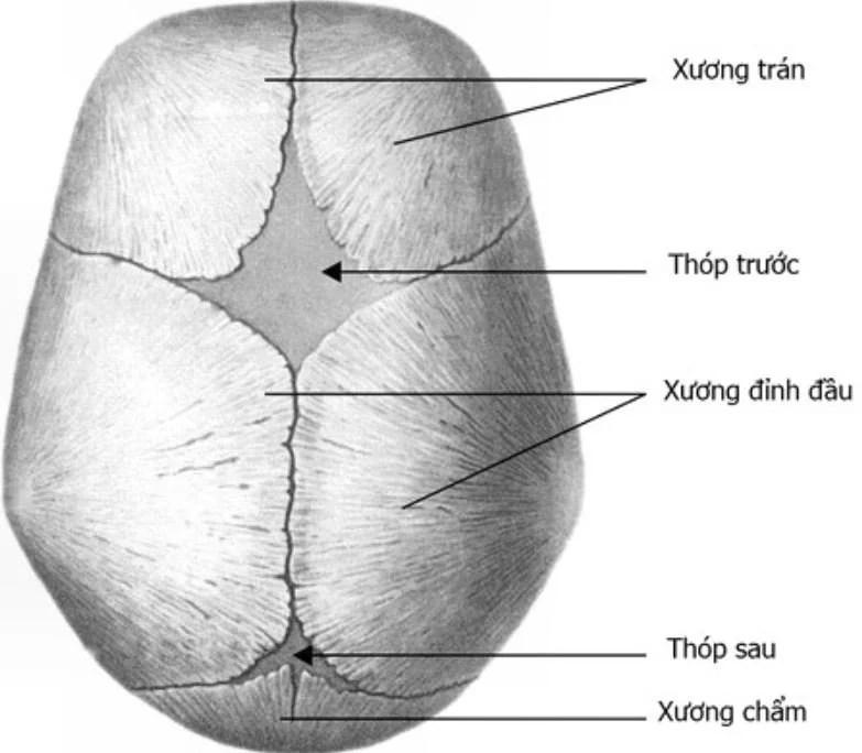 5-bo-phan-cua-tre-so-sinh-khong-nen-cham-vao-01