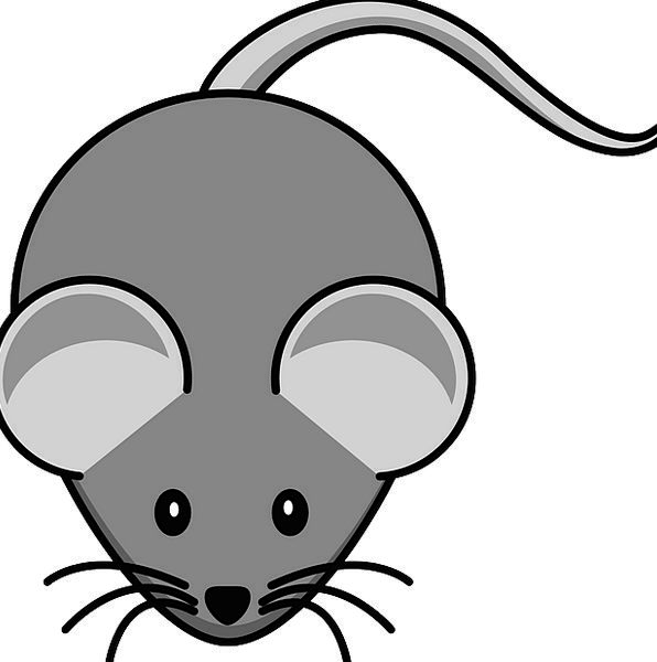 Mouse Old Animal Physical Grey Tail End Schematic