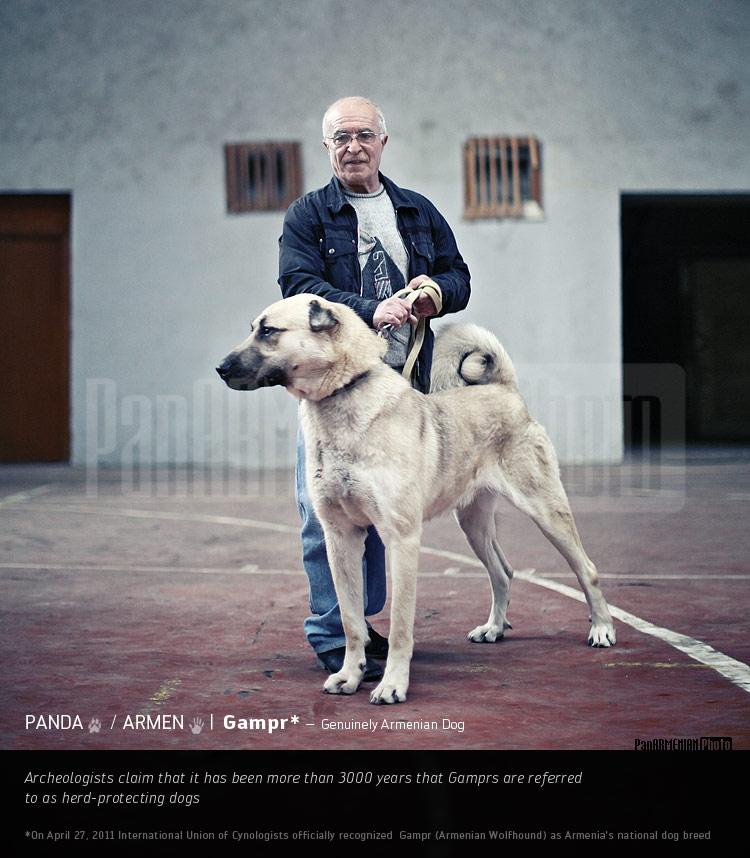 big 3ec0e2c7f Photos Of Dog Pitbull