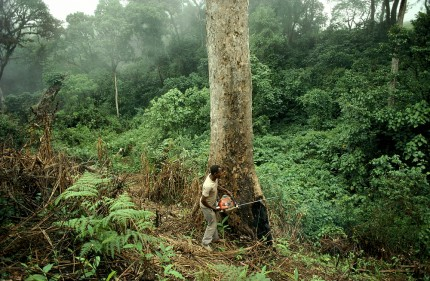 A Nigerian forest used to illustrate the story