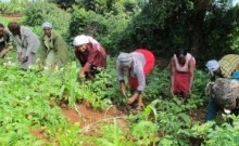 women farm Kenya