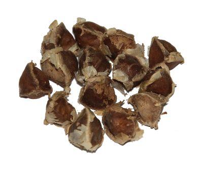 Seeds_of_Moringa_oleifera