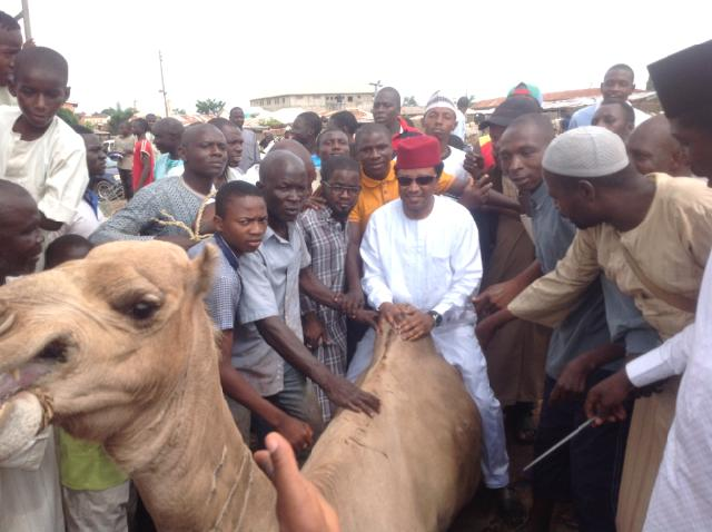 Sen Shehu Sani on the back of one of the camels he distributed to his senatorial zone.  Photo~Abdullahi Garba