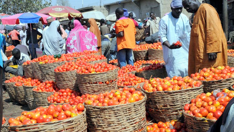 Baskets of tomatoes [Photo: Daily Post]