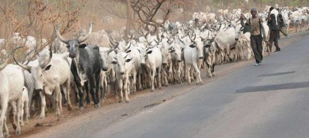 Fulani Herdsmen  Credit: Today.ng