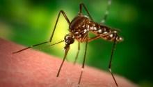 Mosquito [Photo: www.riverside.il.us]