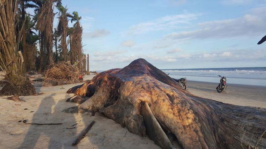 Dead whale found in Akwa Ibom seashore