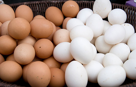 Eggs used to illustrate the story
