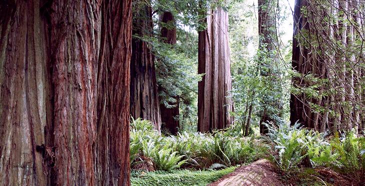 mystery-trees