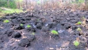 Contaminated Farmland at K-Dere, Ogoni land