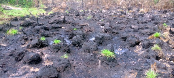 Contaminated Farmland at K-Dere, Ogoni land