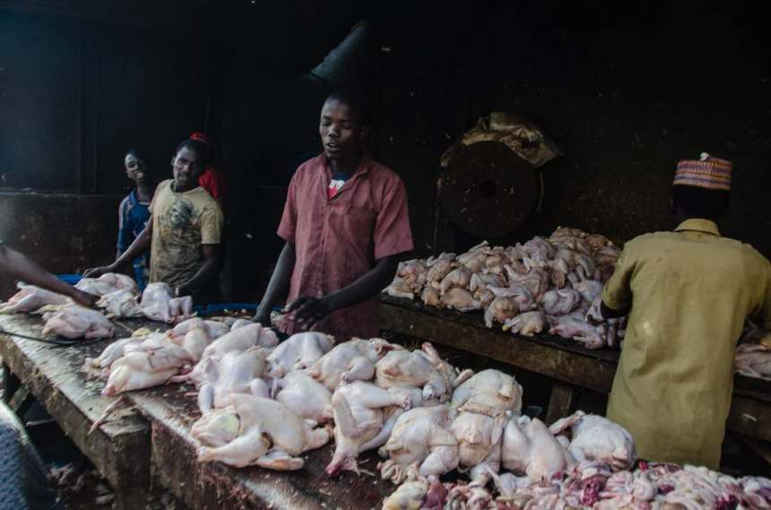 Chicken market [Photo taken by Umar Isa Ladu]