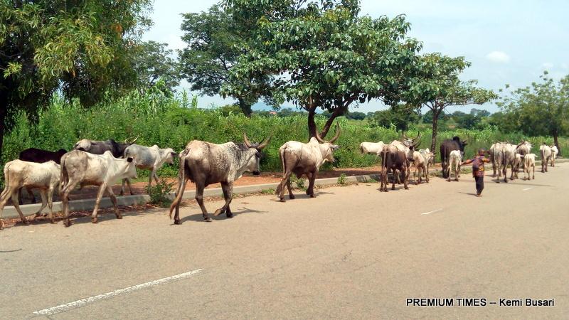 herdsmen grazing within the centre