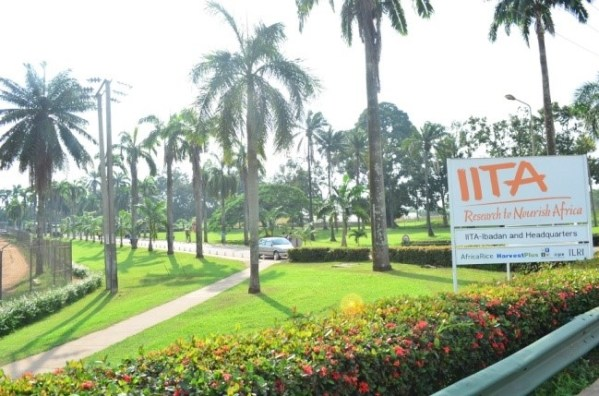 International Institute of Tropical Agriculture [Photo Credit: feca.edu.ng]