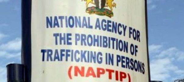 NAPTIP Office [Photo: Nigerian Pilot]
