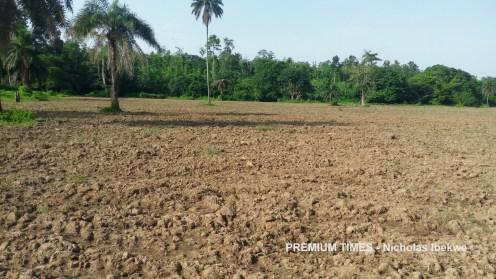 Waiting for rain Kolawole Rotimi's prepared 4-hectare's land, Ijero, Ekiti
