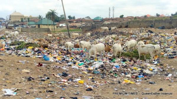 Cattle feeding from a dump site along Karu/Jikwoyi road