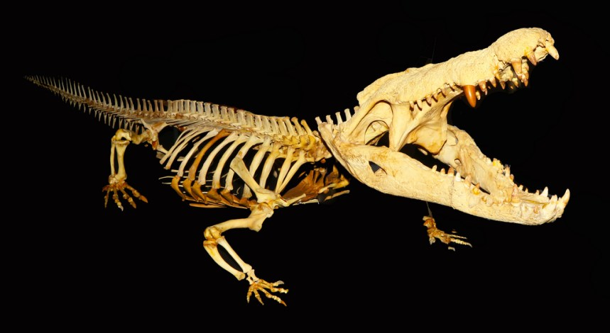 Crocodile Skeleton [photo: Flickr]