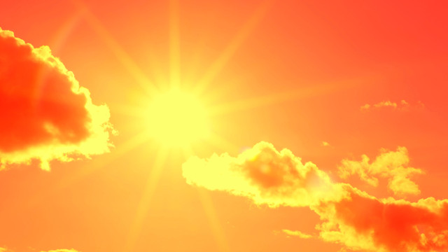 Picture of Sunshine used to illustrate the story. [Photo: The Scientist Magazine]
