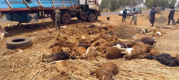Road accident claims four, livestock in Kano