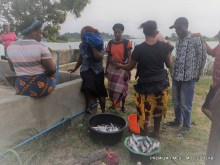 Fish sellers without fish to sell
