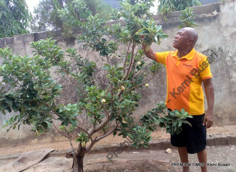 Mr Okoli checking one of the trees