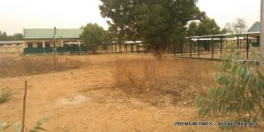 Grasses occupy the school's premises