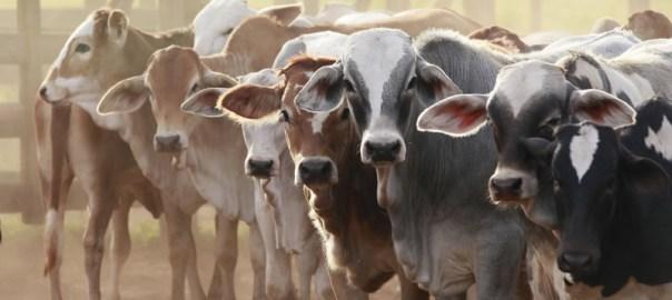 livestock: plan for sustainable livestock development