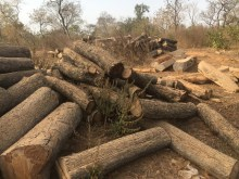 Ghana An abandoned rosewood processing area