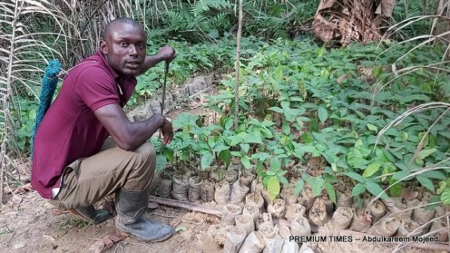 Roland Obi, 28, is a cocoa farmer in Balep, a community that prides itself with mass production of cocoa, banana, and timber in Ikom, Cross River, a state in Nigeria's south south region.