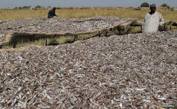 How-Boko-Haram-Sustains-Operations-Through-International-Trade-in-Smoked-Fish-2