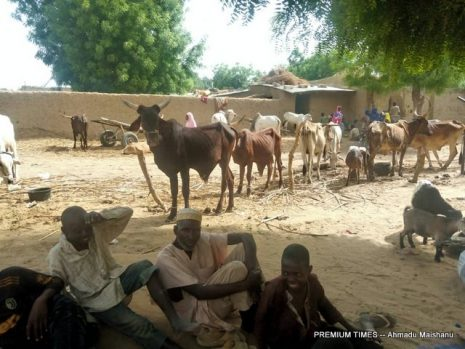 Victims of Sokoto attack taking refuge at Sabon Birni council headquarters in dare need of help.