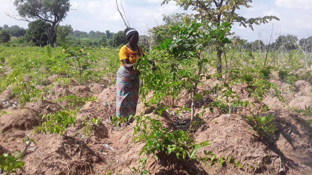 Mseer Nyamve on her farm, in Logo where she depends on daily survival.