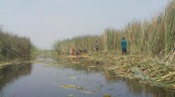 Clearing the blocked waterways from Jigawa to Yobe leading to Chad