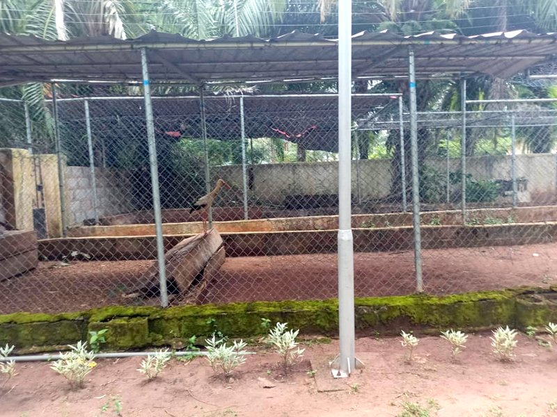 Poultry farm being run by Ned Nwoko
