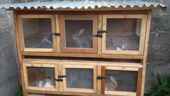 17,000 young Nigerians to be trained in rabbit farming – Official