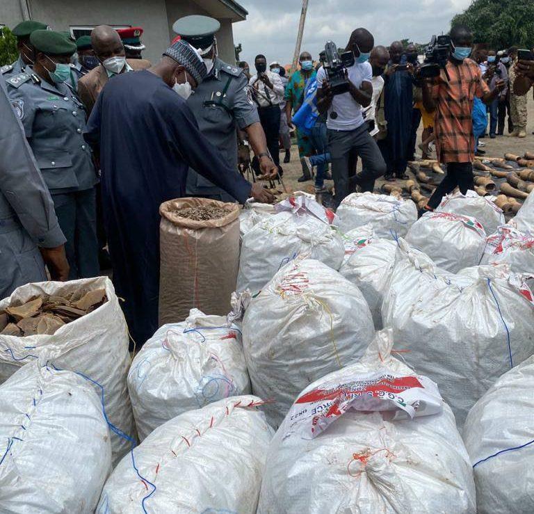 Nigeria_Seizure Ivory, Pangolin Scales