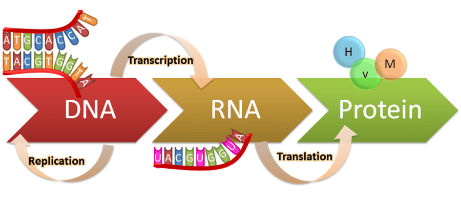 Genes Beget Memes And Memes Beget Genes Modeling A New Catalytic