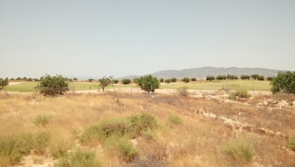 Parcelas Alameda (4)