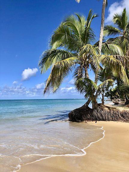 arbres playa coson las terrenas
