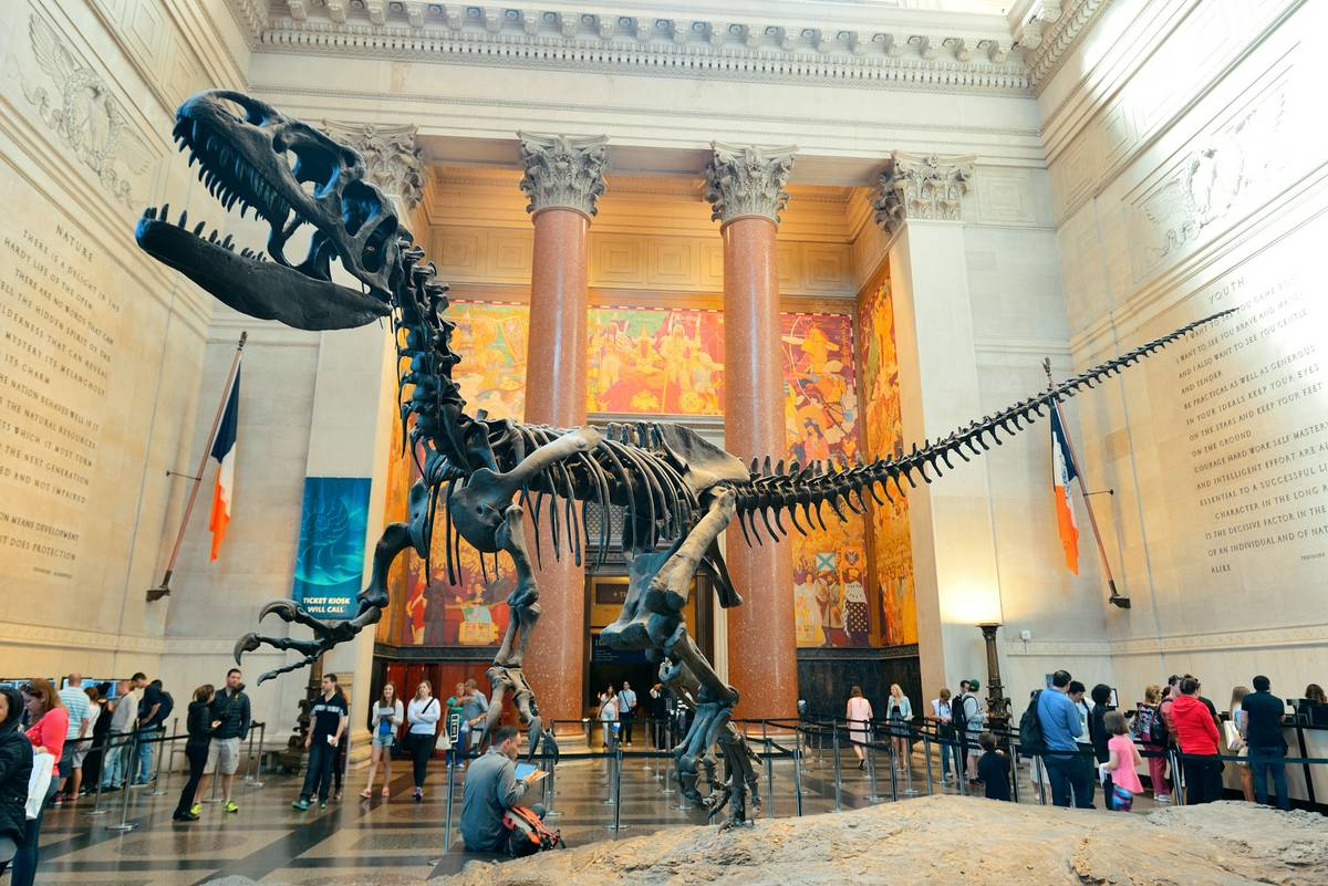 Image result for The American Museum of Natural History