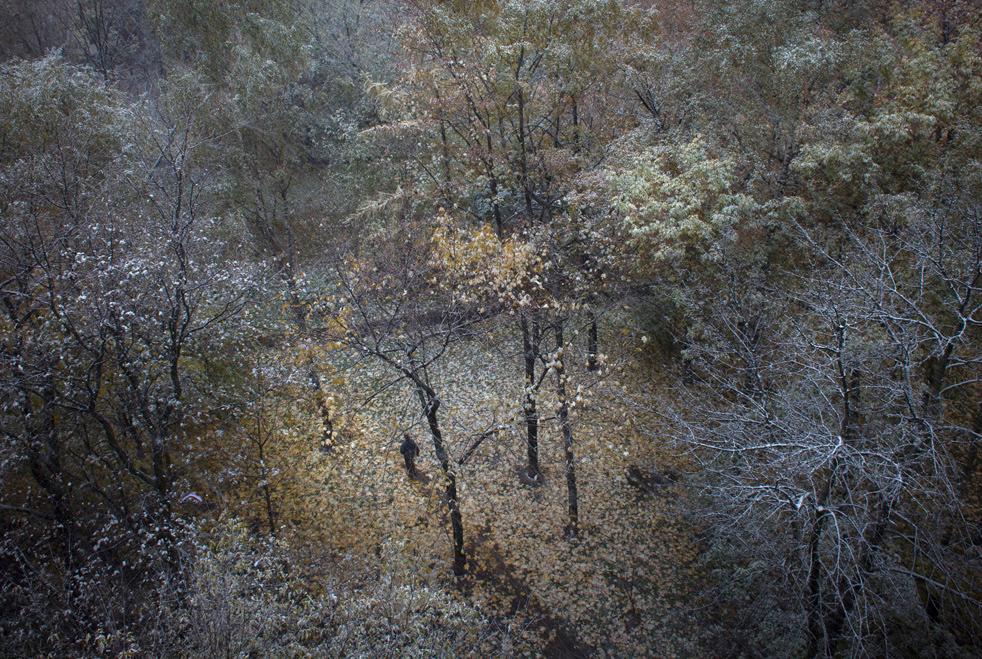 fall_color_25.jpg