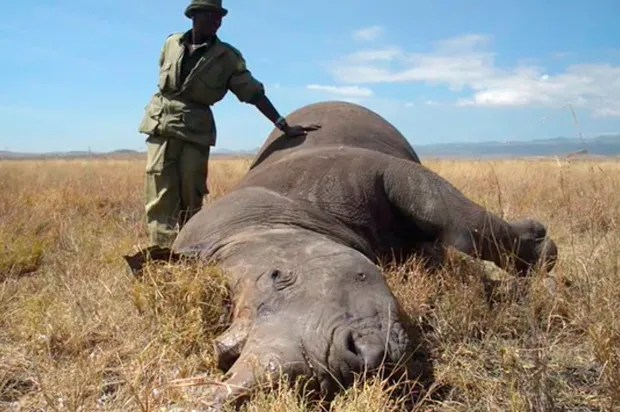 """This is a war"": A conflict photographer takes on the rapidly escalating poaching crisis"