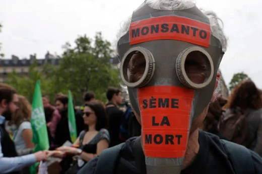 Monsanto has violated the basic human right to a healthy environment and food