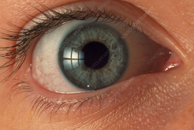 Front view of human eye - Stock Image - P420/0326 ...