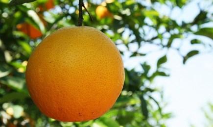 Image result for bear fruit