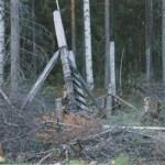 Kvarnhultshagen, också förfallen, består av trästolpar mellan vilka två varv med slanor har spikats fast. Tråd i flera varv runt om, med en tunnare tråd runt den grövre tråden horisontellt. Vid öppningen har slanor använts som stängning. Hagen är ca 175 m i omkrets och 85 m i diameter. De flesta stolparna står fortfarande, murkna i nederdelen. Tråden är rostig och knölig. Mellanslanorna har nästan uteslutande gått av eller rasat ned. Två ledarmar, minst 200 m tillsammans, har också bestått av stolpar, slanor och tråd. De är i samma dåliga skick som hagen. Foto:Agneta Mikaelsson