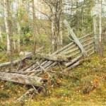 Rengärde och kåta Porsnäsmyren Terräng: Torrmark, ung blandskog mellan omgivande blötmyrar. Beskrivning: Byggd 1946 av stolpar med ca 2-2,5 m mellanrum med 9 varv liggande slanor. Stolphöjd 1,8-2 m. 35 m i diameter. Förfallen. Användes för kalvmärkning. Foto: Camilla Labba