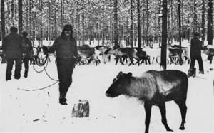 Västbo december 1981