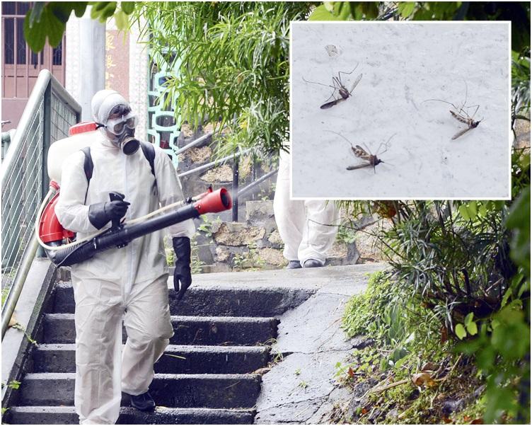上月白紋伊蚊誘蚊產卵器指數續低於警戒水平